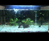 Fish tank relatively new
